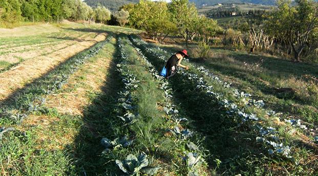 mondeggi coltiva bis 521